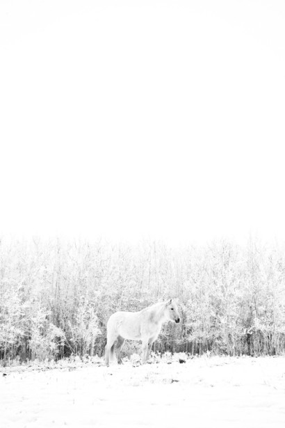 Winter-Horse.jpg