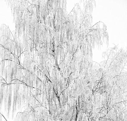 Winter-Tree-Branches.jpg